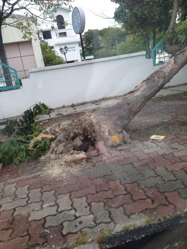 Penang --- tree failure 2