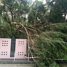 Tree failure 2