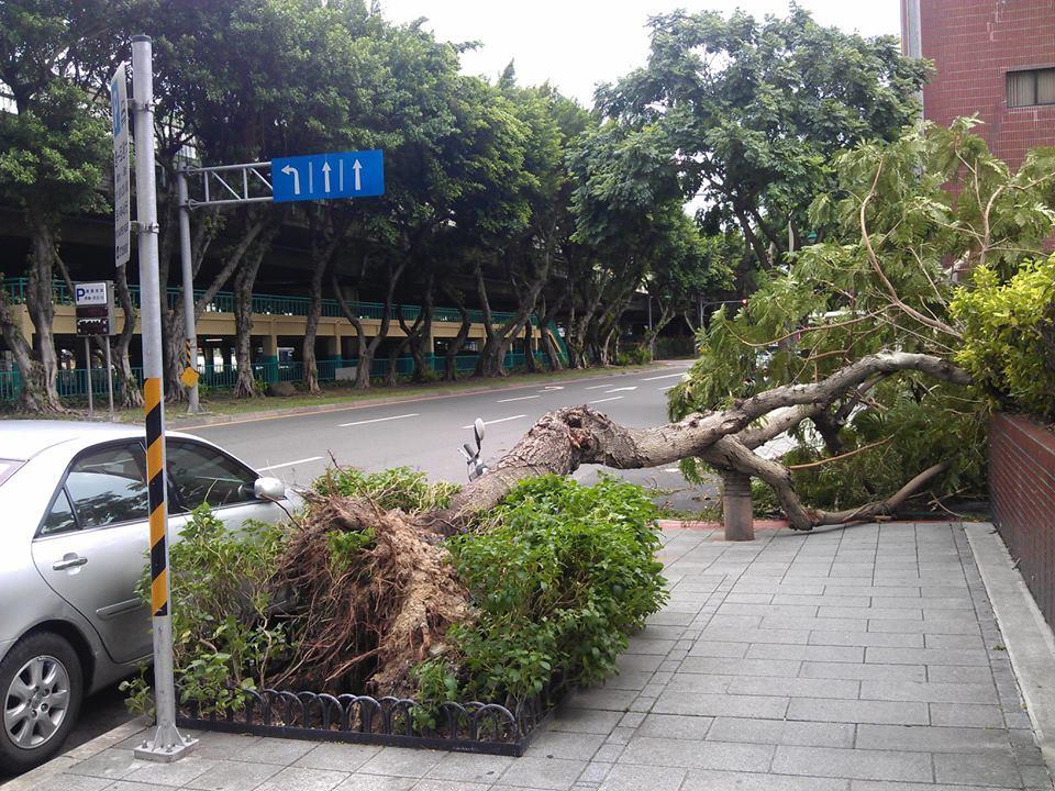 Tree uproot a