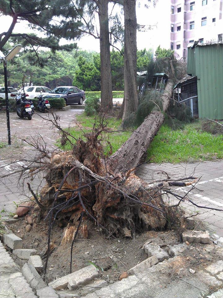tree uproot b